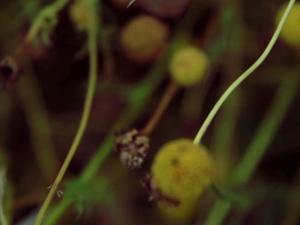 Zerum Lifestyle – Trailer / Music Video